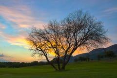 Tramonto di HDR con l'albero nell'area 7 di Magaliesburg Fotografia Stock Libera da Diritti