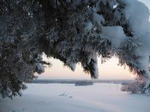 Tramonto di inverno che splende in legno di pino Fotografie Stock Libere da Diritti