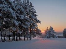 Tramonto di inverno che splende in legno di pino Fotografia Stock Libera da Diritti