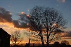Tramonto di inverno di Paso Robles con la siluetta degli alberi e del granaio Fotografia Stock Libera da Diritti
