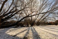 Tramonto di inverno nel più forrest Immagine Stock