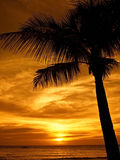 Tramonto di Palmtree fotografia stock