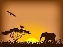 Tramonto di safari Immagine Stock Libera da Diritti
