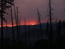 Tramonto di Smokey con gli alberi di pino bruciati proiettati Fotografia Stock