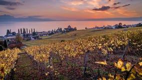 Tramonto di stordimento sopra le vigne ed il lago geneva in Lutry, Svizzera, timelapse nella stagione di caduta video d archivio
