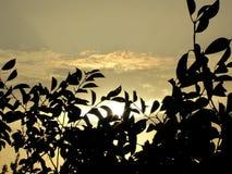Tramonto di un sole dopo la corona dell'albero immagini stock