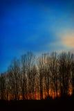 Tramonto dietro gli alberi nudi della tremula in Svezia fotografia stock libera da diritti