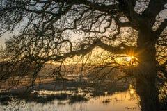 Tramonto dietro un albero sulla palude di Crowhurst, Sussex orientale Fotografie Stock Libere da Diritti