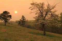 Tramonto dorato con corniolo in fioritura fotografia stock libera da diritti