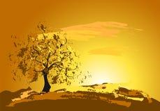 Tramonto dorato con un albero Fotografie Stock
