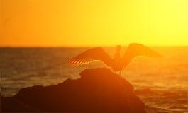 Tramonto dorato del mare Fotografia Stock