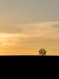 Tramonto dorato nel paesaggio con la siluetta dell'albero del solitario Immagine Stock