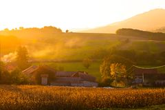 Tramonto dorato nella regione rurale di Croazia Immagini Stock