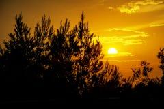 Tramonto dorato sopra gli alberi immagine stock