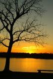 Tramonto dorato sopra il lago con l'albero Fotografie Stock
