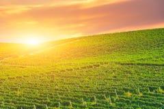 Tramonto dorato sopra una collina verde della vigna Immagine Stock