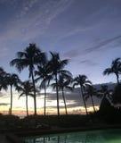 Tramonto drammatico con le palme e lo stagno Fotografie Stock