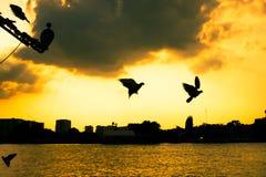 Tramonto e piccione Fotografia Stock Libera da Diritti