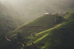 Tramonto e risaie verdi e riso di agricoltura a terrazze Fotografia Stock