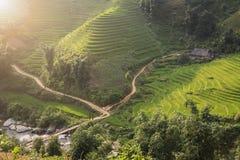 Tramonto e risaie verdi e riso di agricoltura a terrazze Immagini Stock Libere da Diritti
