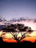 Tramonto e sihouette 01 dell'albero Fotografia Stock