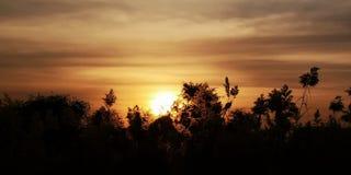 Tramonto e tree& x27; giorno nuvoloso di s immagini stock