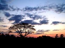 Tramonto ed albero 04 fotografie stock libere da diritti