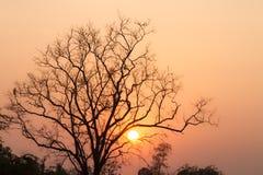 Tramonto ed albero asciutto Fotografia Stock Libera da Diritti