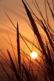 Tramonto ed erba della duna Fotografie Stock Libere da Diritti