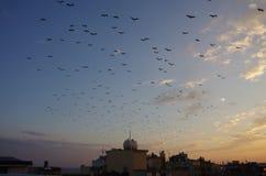 Tramonto ed uccelli a Costantinopoli fotografie stock libere da diritti