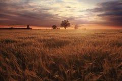 Tramonto fantastico del paesaggio sul giacimento di grano immagine stock