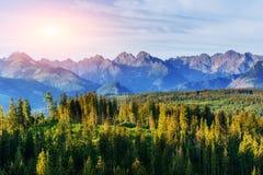 Tramonto fantastico nelle montagne dell'Ucraina Buon albero d'accensione Fotografia Stock Libera da Diritti