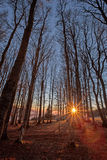Tramonto in foresta nera, Germania Fotografie Stock