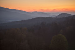 Tramonto in foresta nera, Germania Immagini Stock