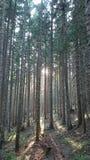 Tramonto in foresta verde Immagine Stock Libera da Diritti