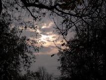 Tramonto fra gli alberi in autunno Fotografie Stock