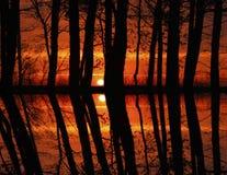 Tramonto in foresta Fotografia Stock Libera da Diritti