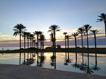 Tramonto fra le palme e il mare in una sera dorata Stock Image