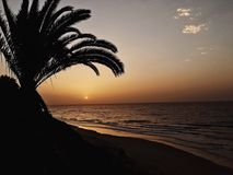 Tramonto in Fuertaventura, spiaggia e palma Immagine Stock