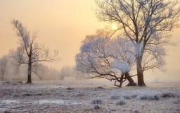 Tramonto gelido Fotografia Stock