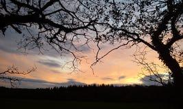 Tramonto giallo con gli alberi di inverno fotografie stock