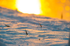 Tramonto giallo con il dettaglio della neve Immagine Stock