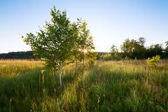 Tramonto Glade della foresta I rami degli alberi immagini stock