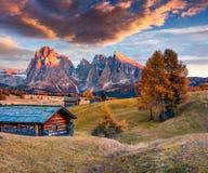 Tramonto incredibile in Alpe di Siusi con il bello larice giallo t Fotografia Stock Libera da Diritti