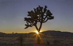 Tramonto a Joshua Tree National Park California U.S.A. immagini stock