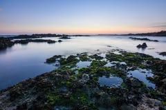 Tramonto magico dorato su una spiaggia rocciosa con muschio verde a Oporto portugal europa fotografia stock libera da diritti