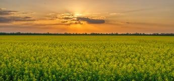 Tramonto magnifico sopra il giacimento del seme di ravizzone immagini stock