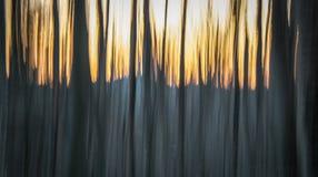Tramonto, montagne ed alberi Immagine Stock