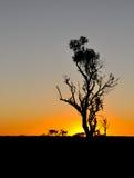 Tramonto namibiano Fotografia Stock