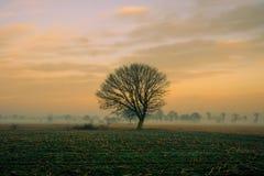 Tramonto nebbioso variopinto nei campi con il cielo nuvoloso Fotografia Stock